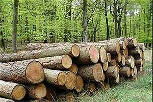 تصویر  محموله بزرگ چوب قاچاق توقیف شد
