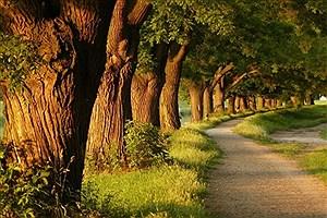 تصویر  کسب رتبه اول پوشش بیمه ای تنه درختان در کشور توسط استان قزوین