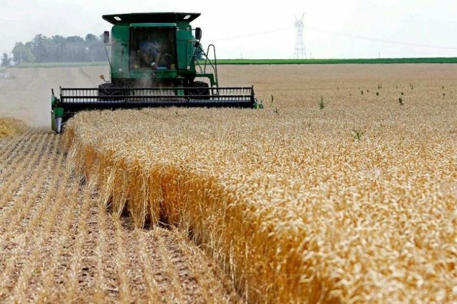 ۲۰۰ هزار تن گندم برای بهبود کیفیت نان به استان مرکزی وارد شد