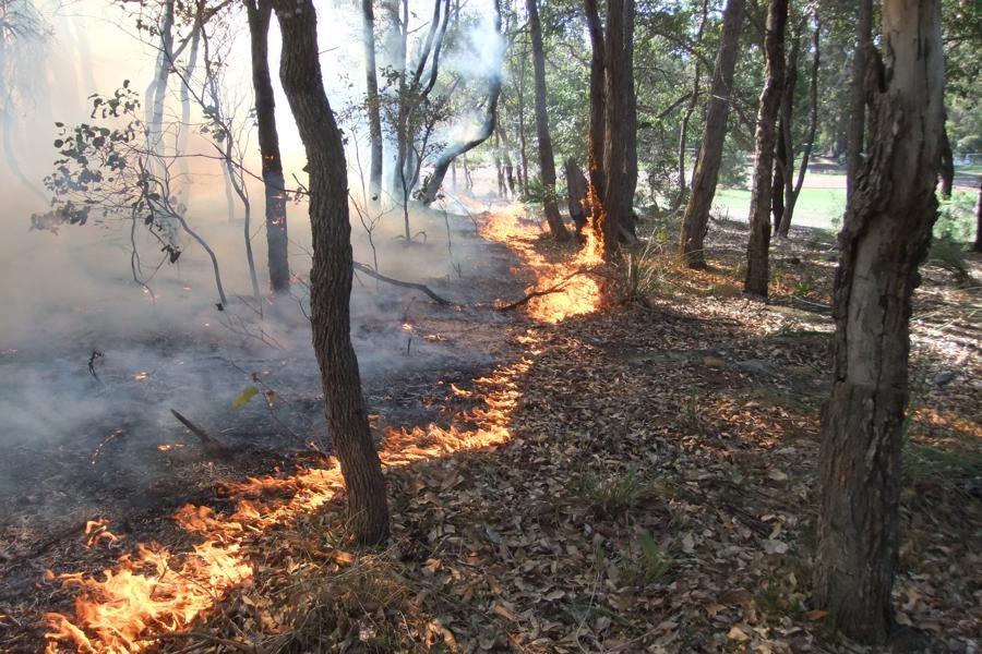 آتش سوزی در ۶ هزار متر مربع از عرصه های جنگلی گیلان