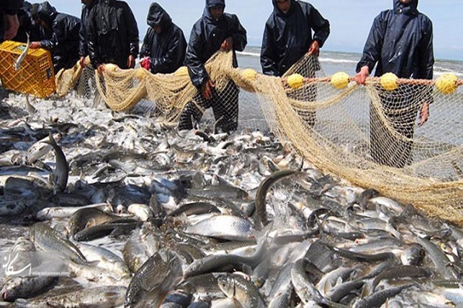 تصویر صید هزار و ۳۳۰ تن ماهی استخوانی درگیلان