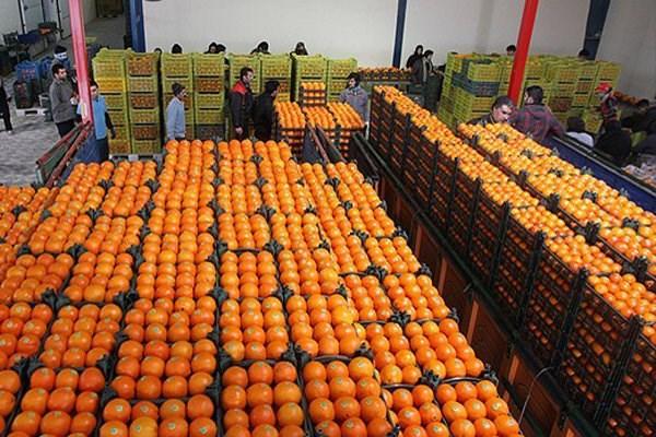 توزیع 700 تن میوه در کردستان/ میوه هایی که توزیع شد ولی دیده نشد