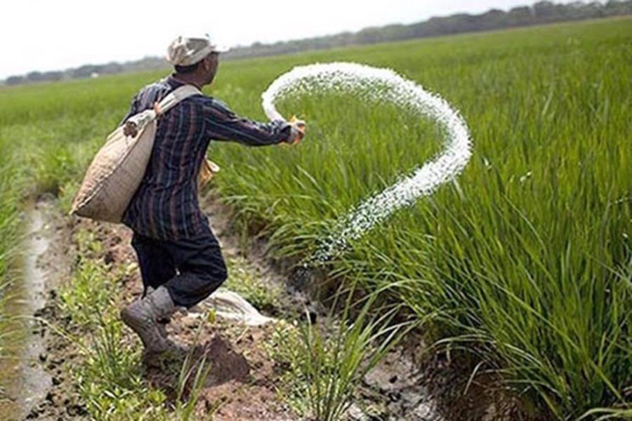 نگرانی شدید کشاورزان گیلانی و تهدید امنیت غذایی کشور