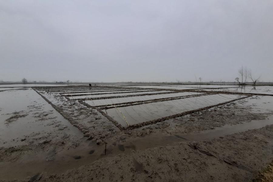70 درصد اراضی شالیزاری در گیلان تجهیز شده اند