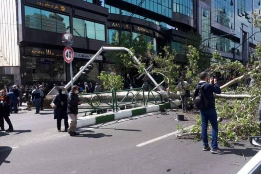 چنار ۶۰ ساله خیابان ولیعصر  سقوط کرد