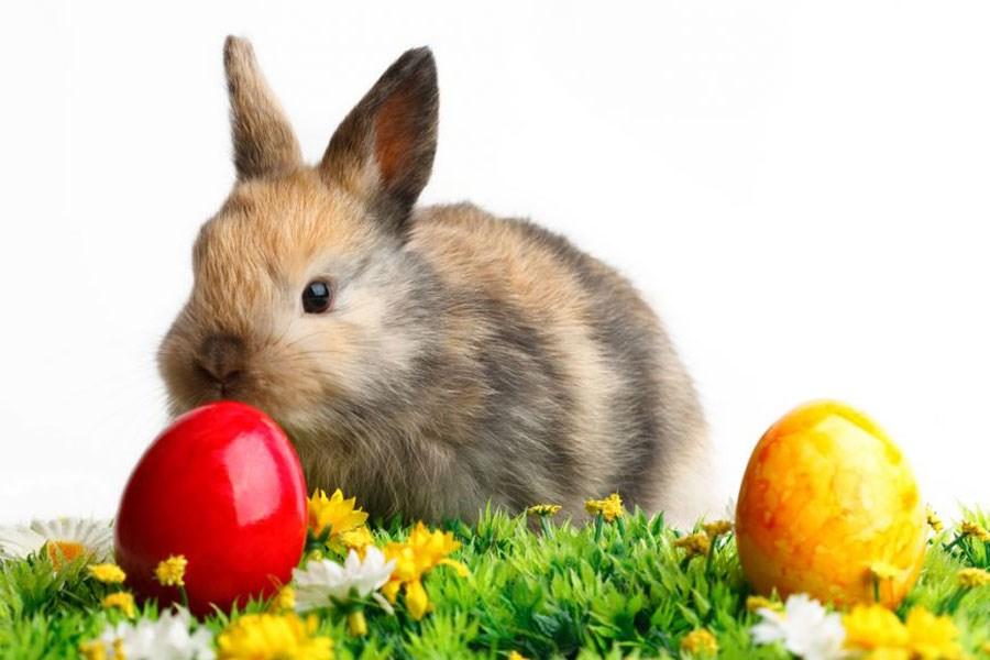 دانستنی هایی درباره عید پاک یا ایستر
