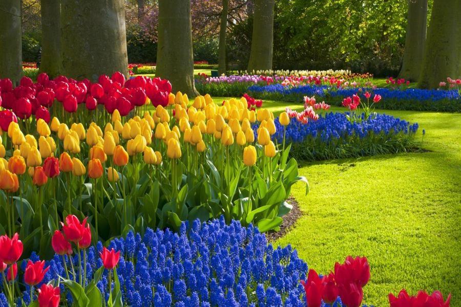 دامنه جنوبی البرز میزبان جشنواره گلها