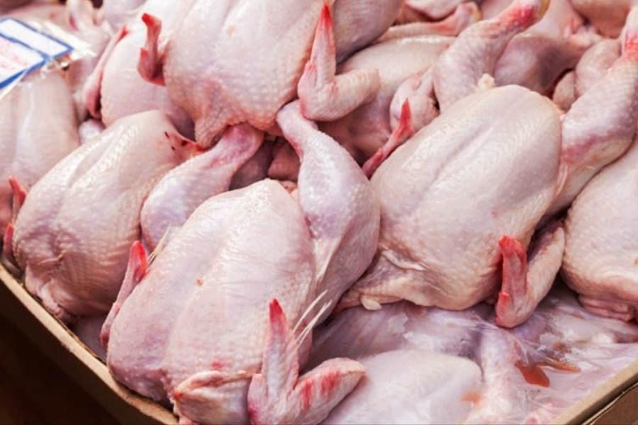 نظارت کامل دامپزشکی بر ورود مرغ/ هیچ مرغ تراریخته ای وارد کشور نمیشود