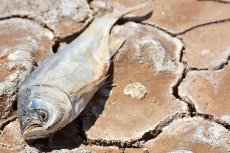 ادامه جستجو درباره علت مرگ ماهیها در لردگان