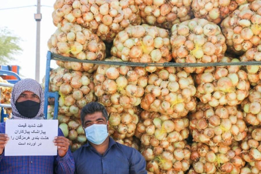 تصویر خرید تضمینی ۲۳ هزار تن پیاز از کشاورزان