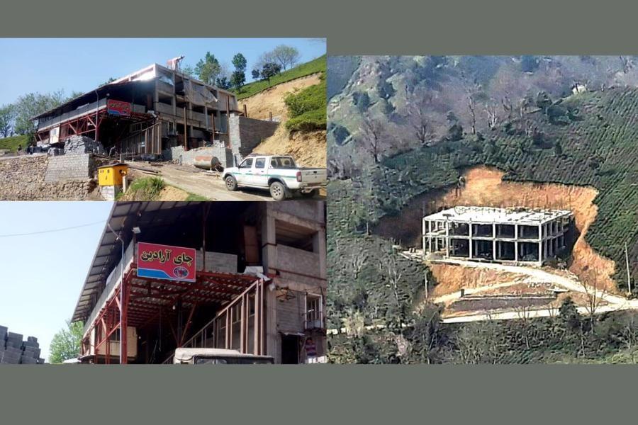 پرونده تخریب باغ چای روستای سرچشمه لاهیجان در سال 97 مختومه شد