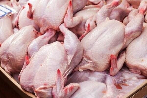 کاهش قیمت مرغ در خراسان شمالی / برخی شهرستانها مرغ نمی خواهند
