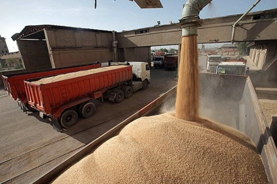 استان همدان بیشترین میزان ذخیره گندم را در کشور دارد