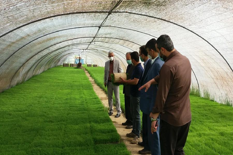 بهره برداری از 5 بانک جدید نشاء برنج در صومعه سرا