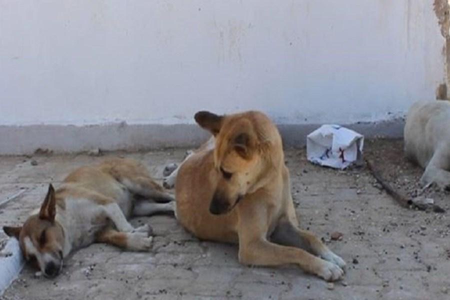 ممانعت حامیان حیوانات از ساماندهی سگهای بلاصاحب