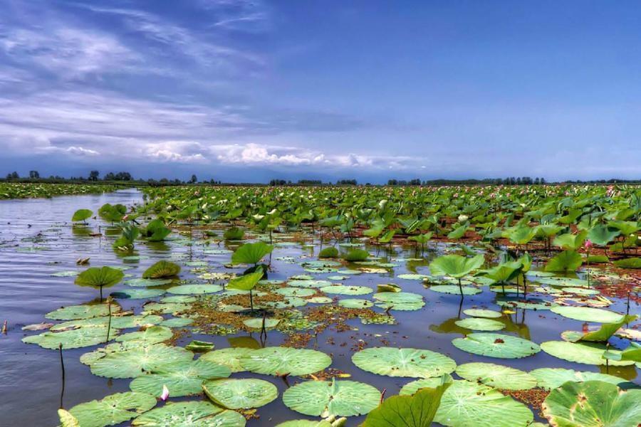 طرحی هفت ساله برای احیای تالاب انزلی؛ بزرگترین زیستگاه طبیعی کشور