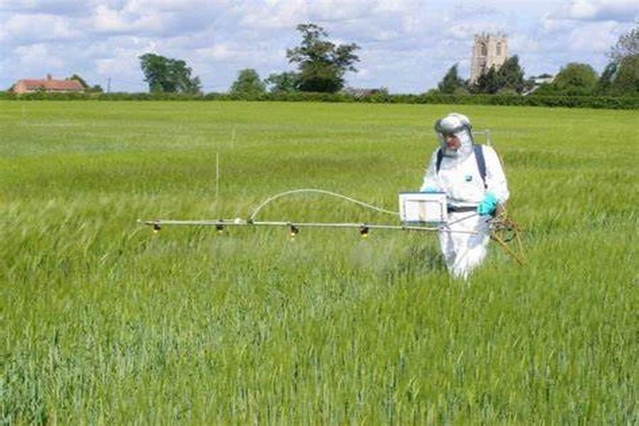آفت کشی نباتی؛ ارتقا 30 درصدی راندمان محصولات کشاورزی