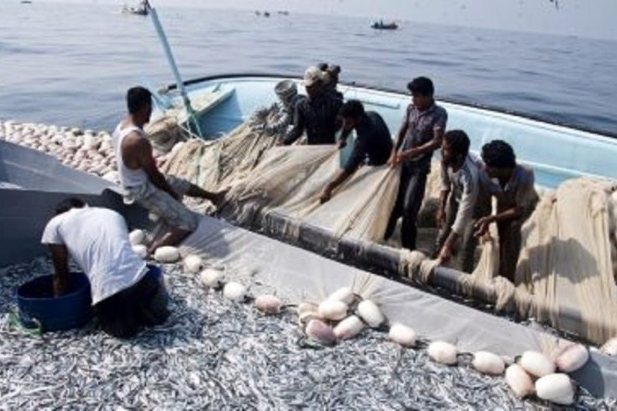 ممنوعیت صید برخی آبزیان در هرمزگان