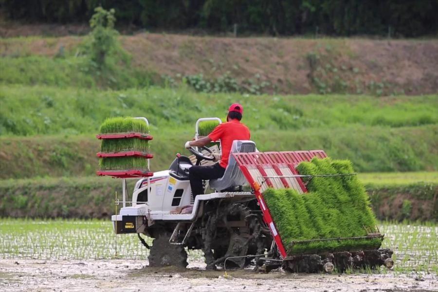 آغاز نخستین نشاء مکانیزه برنج سال زراعی جدید در گیلان