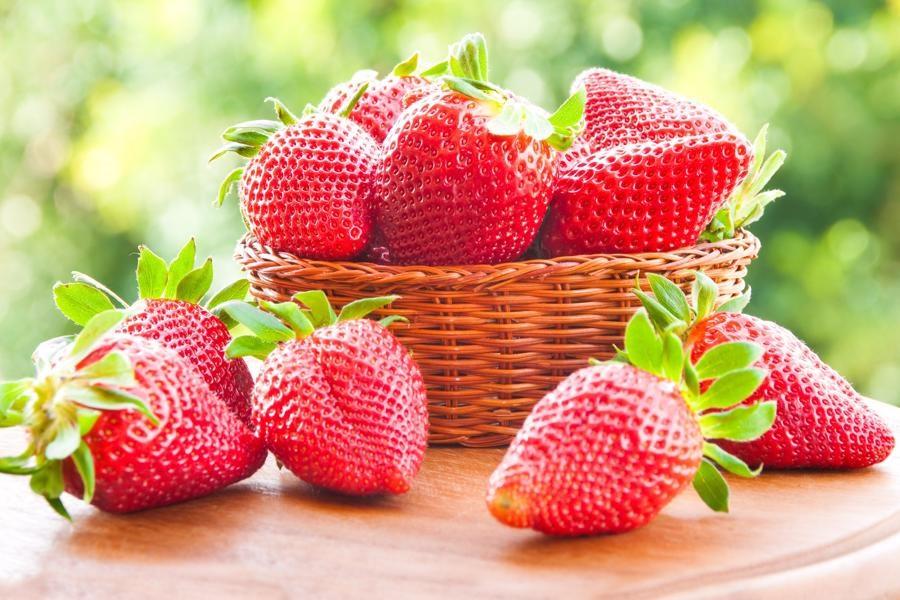 آغاز برداشت نوبرانه توت فرنگی در باغهای گیلان