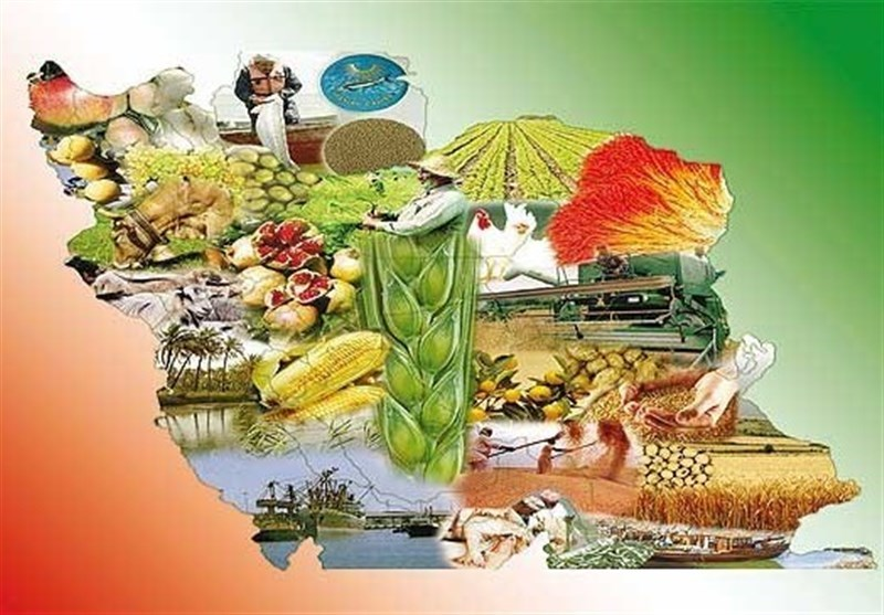 مخالفت تشکل های بخش کشاورزی با مصوبه هیئت وزیران برای واگذاری تعاون روستایی