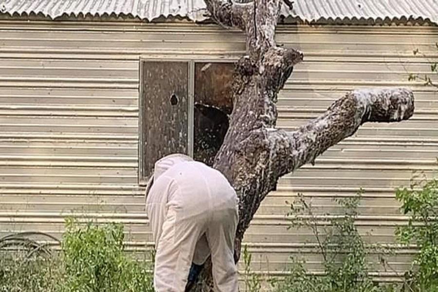 حمله مرگبار زنبورهای عسل به مرد سالخورده