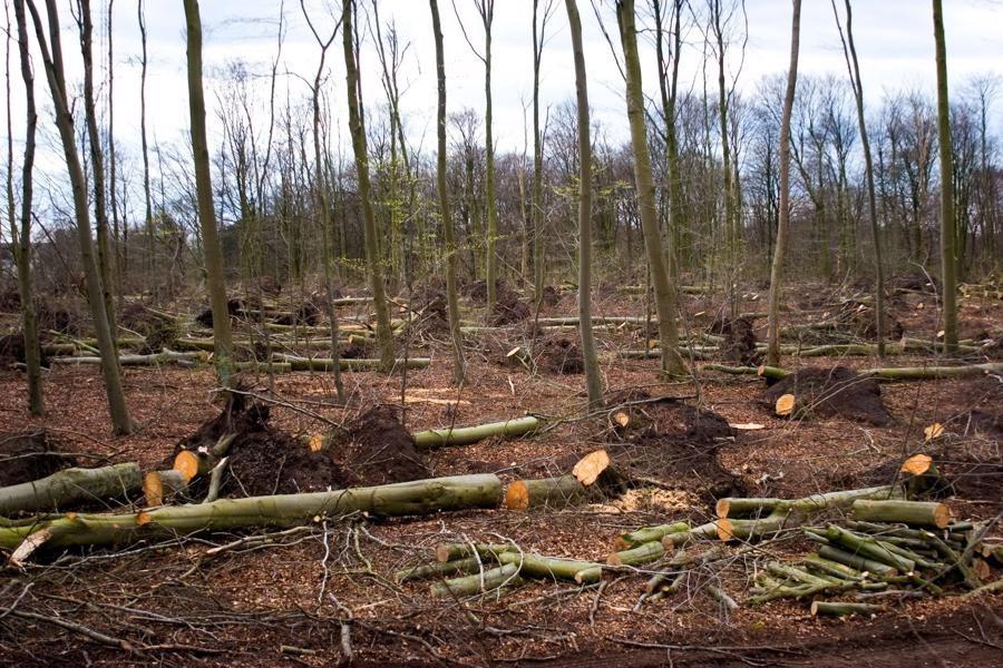 تصویر کشف بیش از 45 هزار اصله چوبآلات جنگلی/ تشدید مقابله با قاچاق چوب در کارخانجات