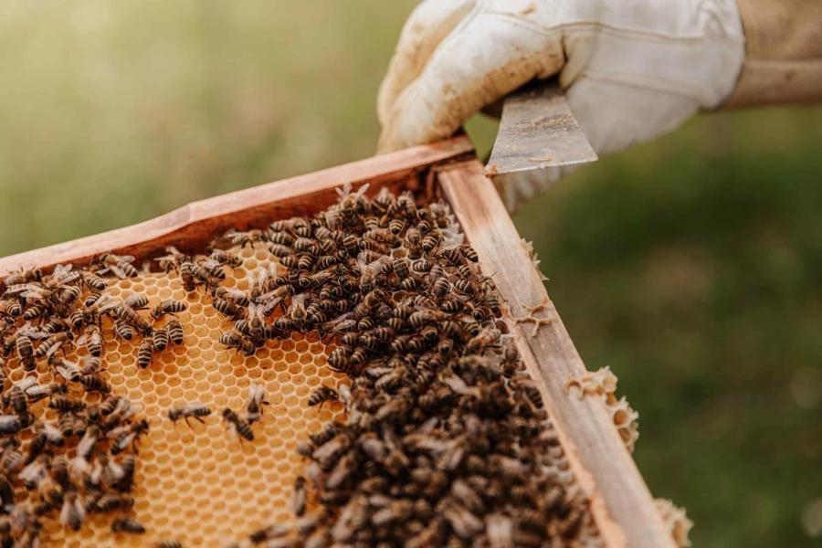 تصویر کوچ بهاره 5 هزار زنبوردار به گیلان