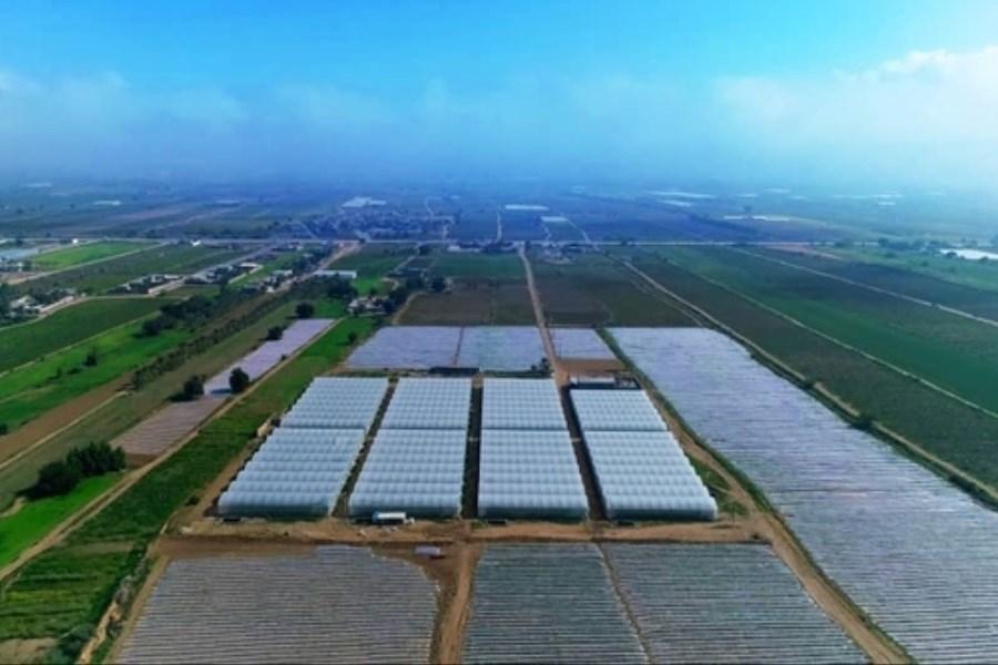 تصویر حمایت 38 میلیاردی بانک کشاورزی از راه اندازی گلخانه در استان بوشهر