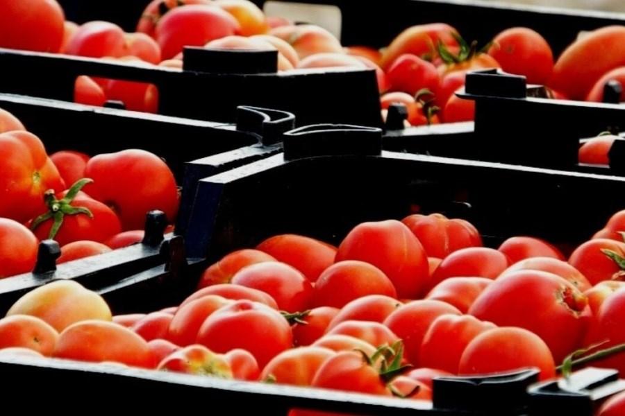 تصویر ۱۵ مرکز عرضه مستقیم محصولات کشاورزی در لرستان احداث میشود
