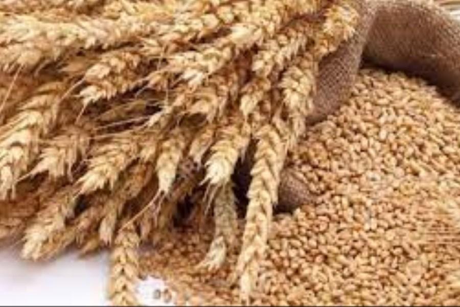 خرید تضمیتی 750 تن گندم در خوزستان