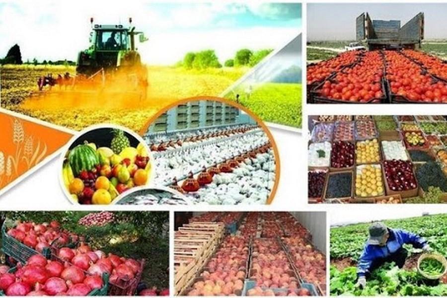 تصویر جذب بیش از یک میلیون تن ماده خام کشاورزی در صنایع تبدیلی