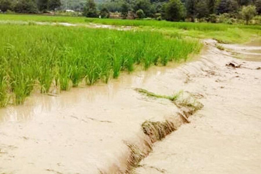خسارت ۶۱ میلیارد ریالی باران و تگرگ به مزارع و باغات