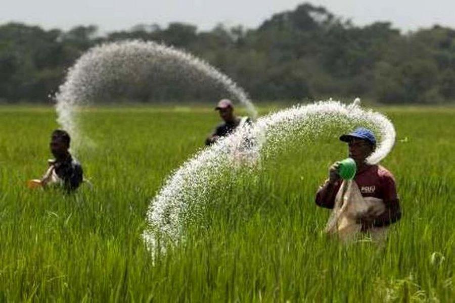 ۶۰ هزار تن کود بین کشاورزان توزیع شد
