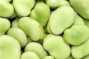 تصویر  باقالا در دوران کرونا با احتیاط مصرف شود