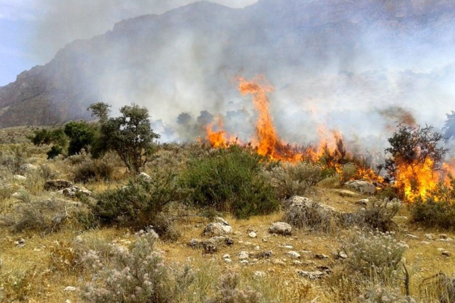 ادامه آتشسوزی در کوههای باغ تاژ دشتستان بوشهر