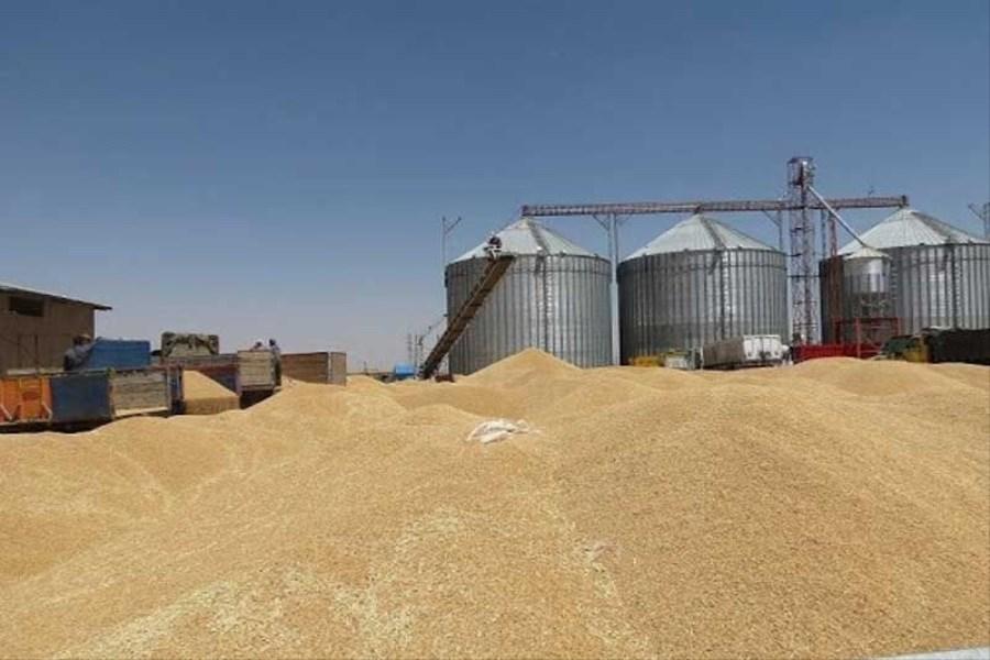 رتبه دوم خرید گندم در خوزستان متعلق به حمیدیه است