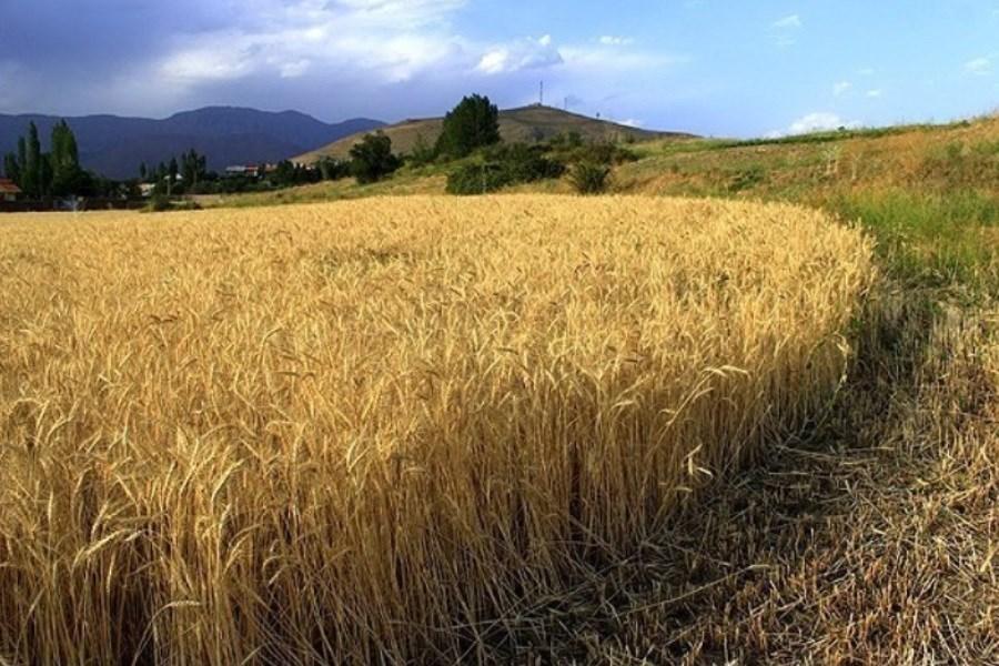رشد 34.7 درصدی نرخ تورم تولیدکننده زراعی در سال 99