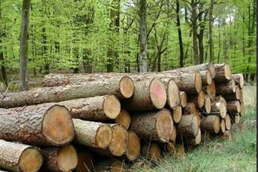 باند سازمان یافته قاچاق چوب در گلستان منهدم شد