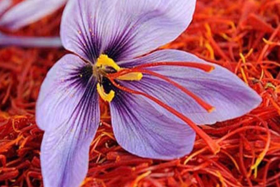 صادرات ۱۹۰ میلیون دلار زعفران در سال گذشته