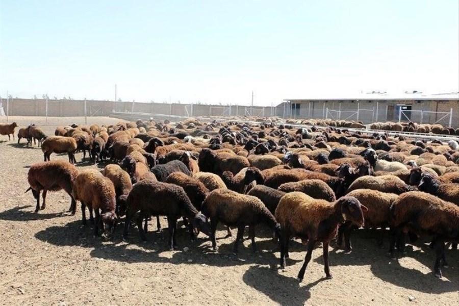تصویر چمبره خشکسالی بر آینده دامداران کردستانی