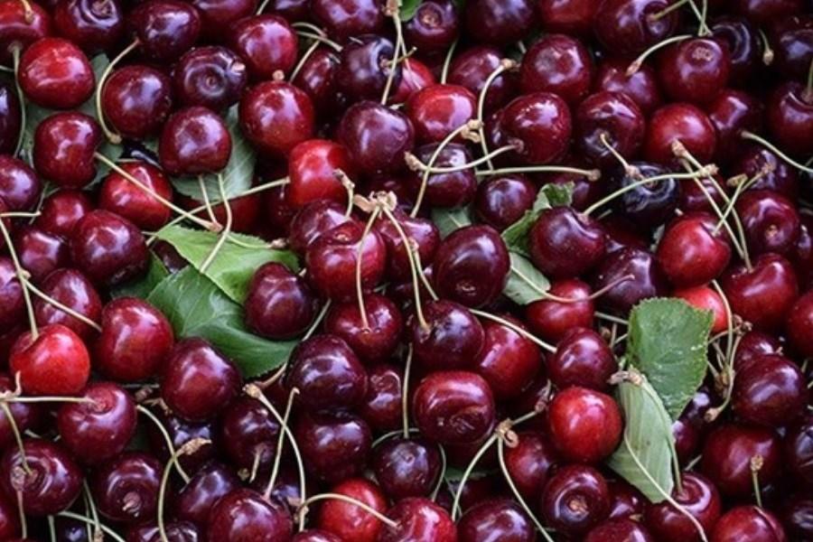 تصویر میوههای نوبرانه با قیمت کیلویی 100 هزار تومان
