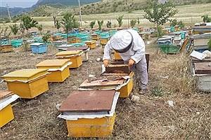 تصویر  اختصاص تسهیلات سرمایه ثابت برای زنبورداران