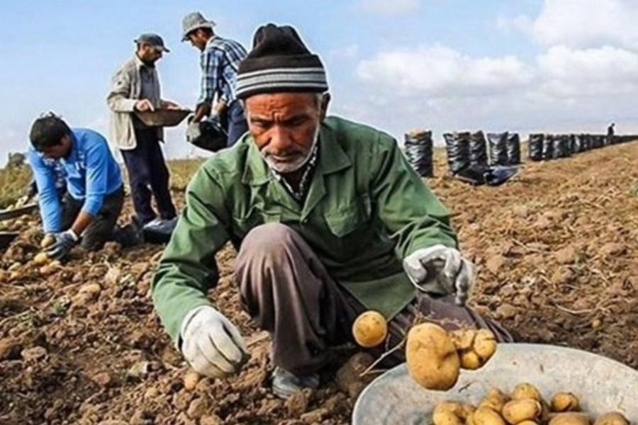 سه اشتباه دولت روحانی در بخش کشاورزی