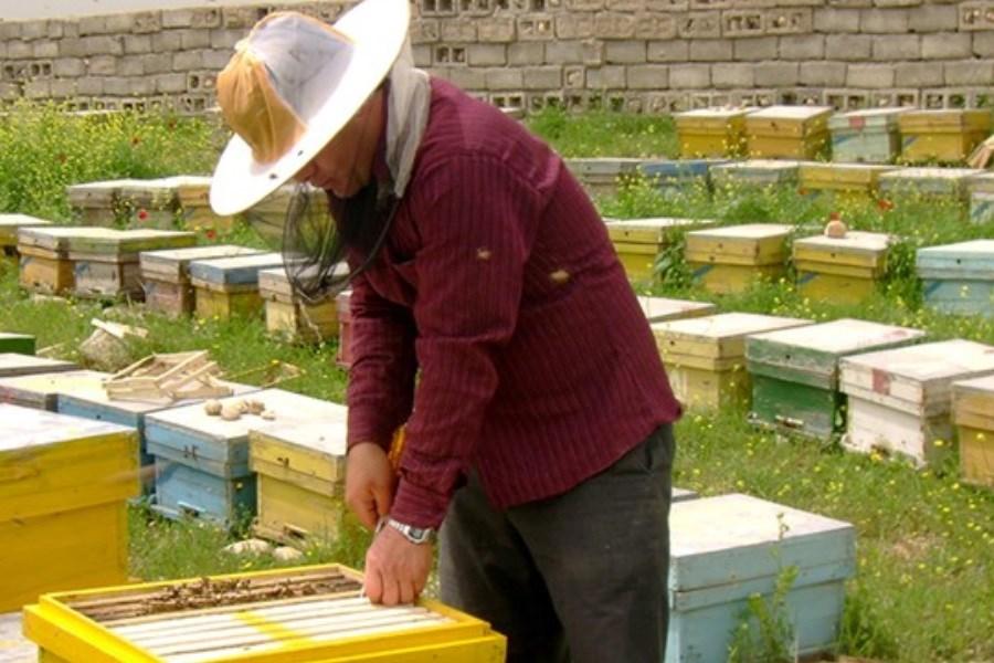 واردات ملکه زنبور قاچاق به کشور
