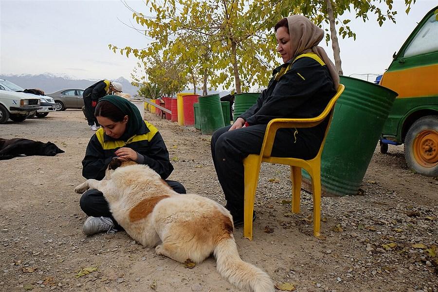 بازار خرید و فروش میلیونی پرنده های زینتی / رواج حیوان گردی در بوستان های پایتخت