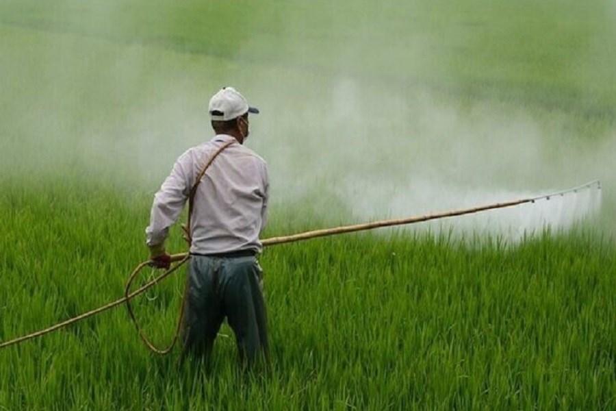 گسترش مبارزه با پوره سن در کشتزارهای خراسان رضوی