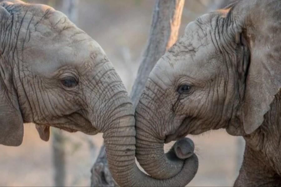 حیوانات چگونه یکدیگر را میشناسند؟