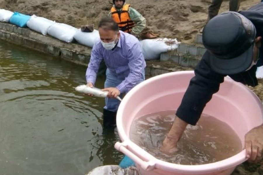 رهاسازی ۳۷۰ قطعه ماهی قزل آلا