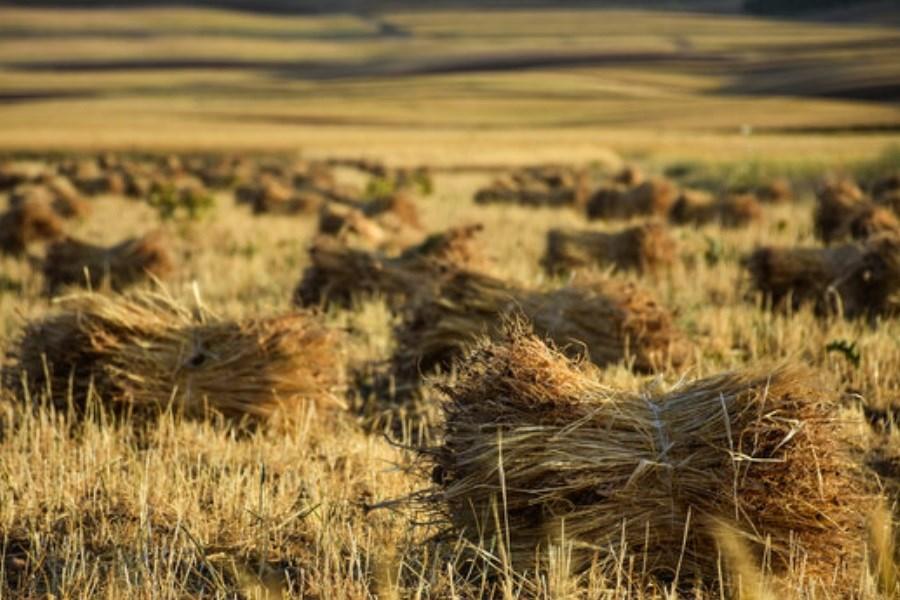 مواجهه کشاورزی خوزستان با یک چالش و بحران اساسی